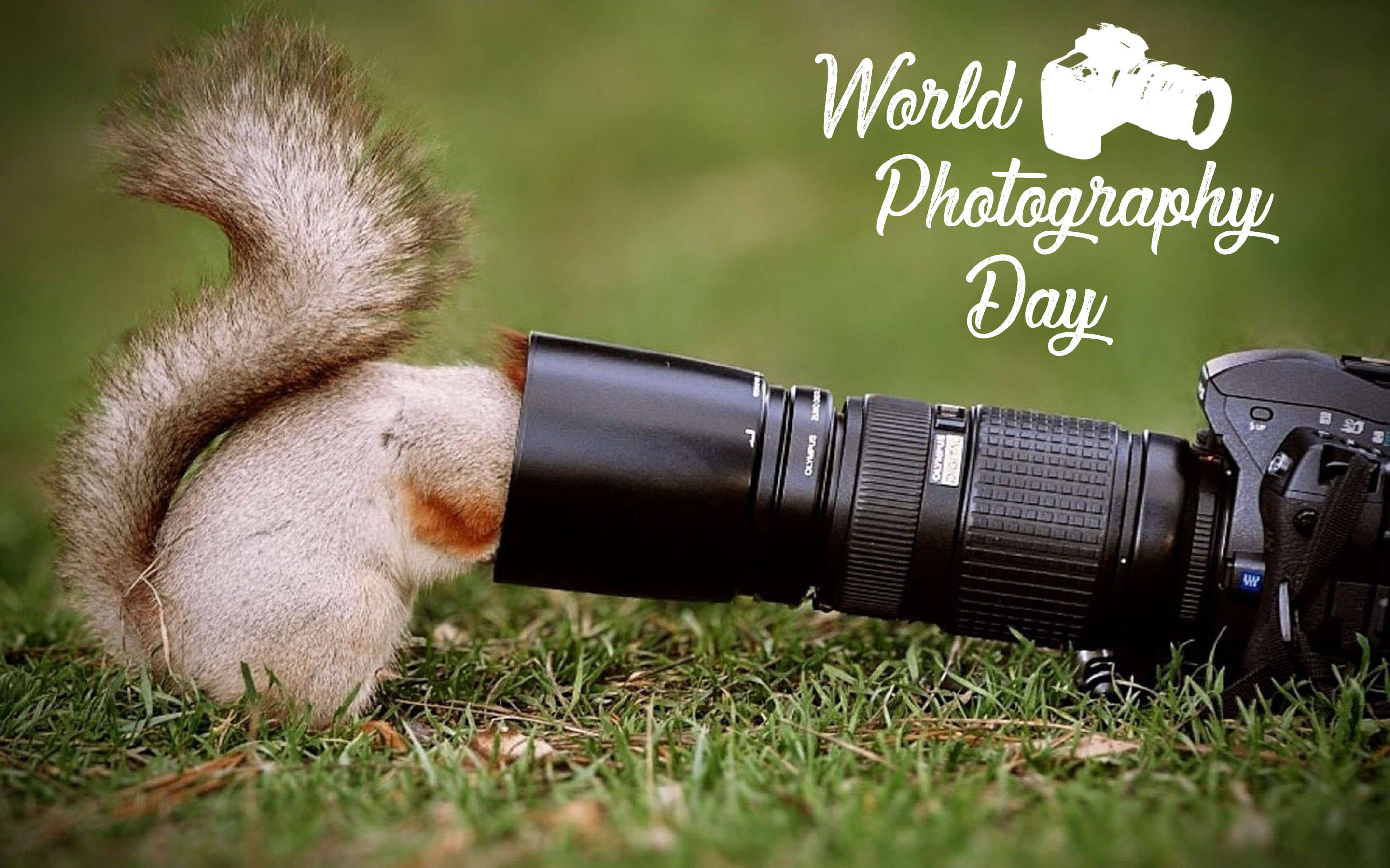 world photography day squirrel in camera lens hd wallpaper