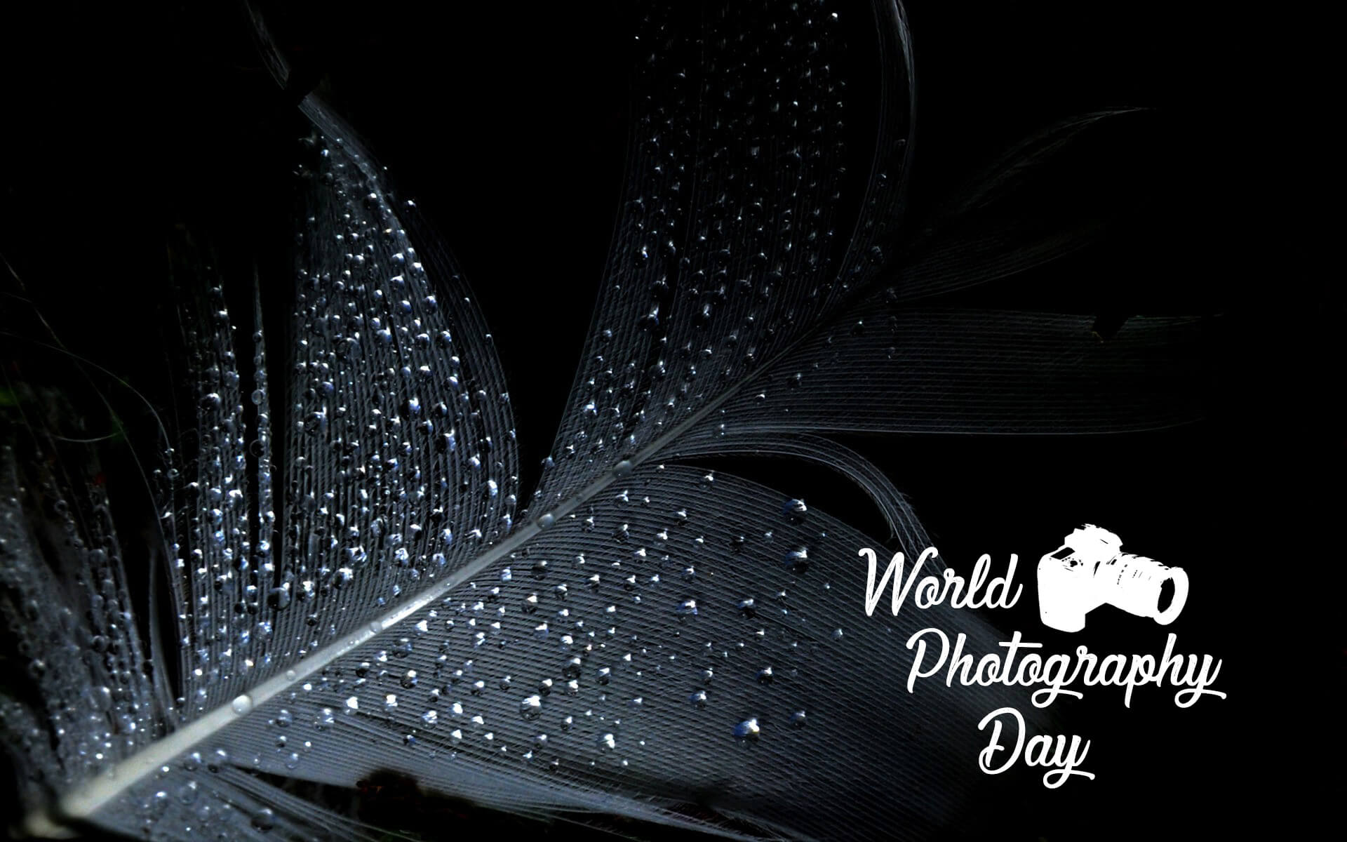 world photography day water drops black feather wallpaper